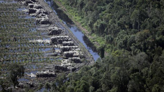 Grosse Flächen des Regenwalds werden gerodet.