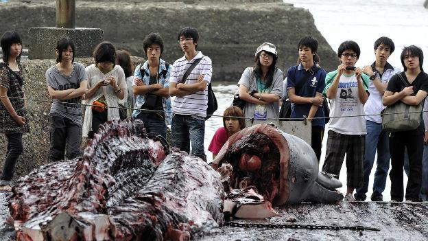 Japan muss den Walfang in der Antarktis einstellen.