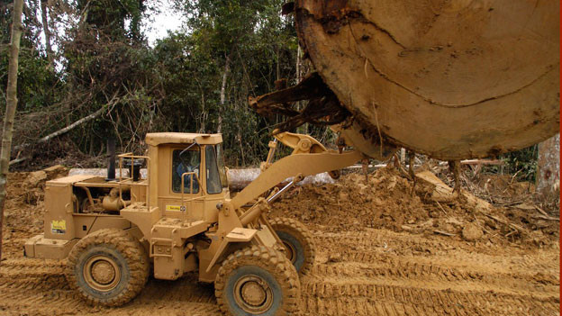 Der Lebensraum indigener Völker wird bedroht, auch durch mächtige Rohstoff-Firmen. Mit Baggern wird der Regenwald abgeholzt. (Symbolbild).