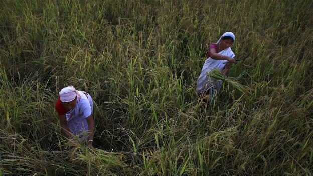 Indische Bäuerinnen an der Arbeit.