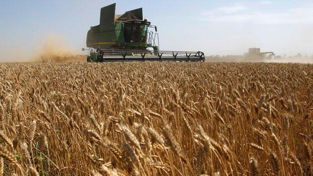 Weizenernte auf einem Feld in der Nähe von Mezokovesd im Osten von Budapest, Ungarn.