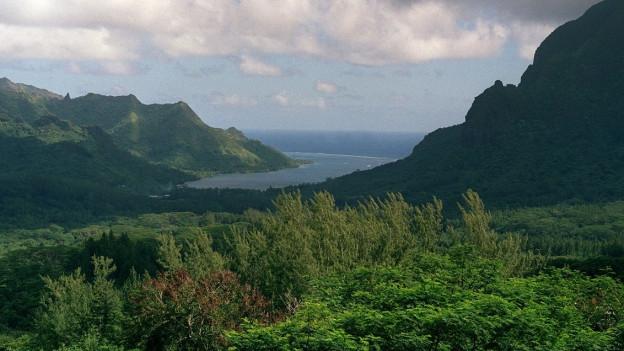 Auf dem Bild sieht man im Vordergrund Bäume und Sträucher, im Hintergrund ist eine Bucht zu sehen.