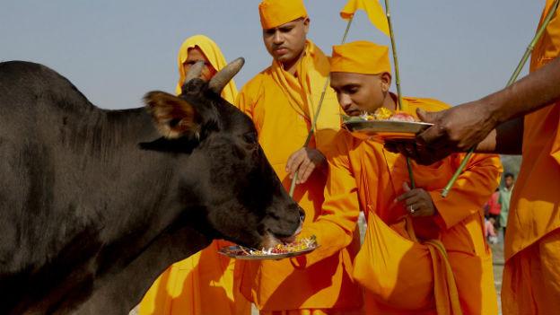 Hindunationalisten und die heilige Kuh