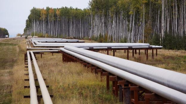 Das Bild zeigt Pipelines, die mitten durch eine Waldschneise führen.