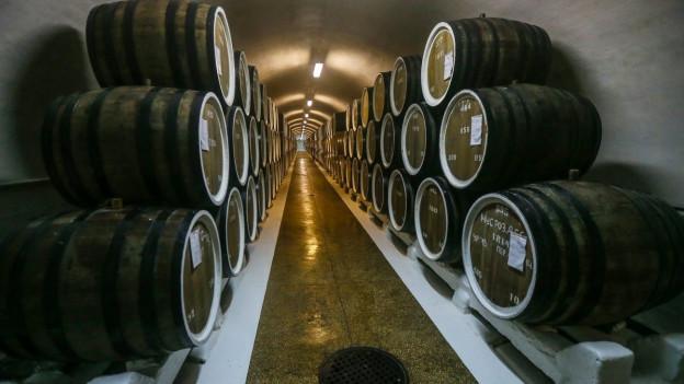 Ein langer unterirdischer Gang mit Fässern im Weingut Massandra.