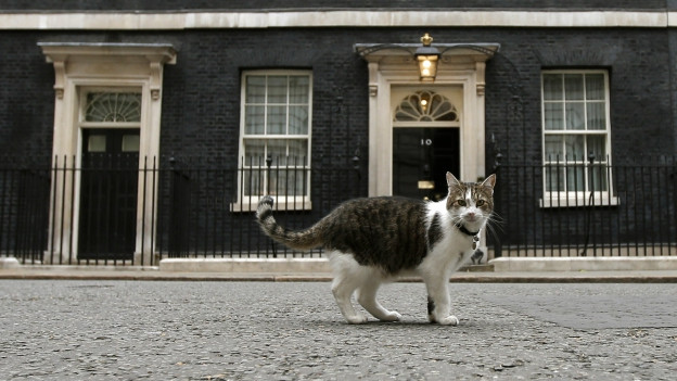 Hauskater Larry vor der Ten Downing Street.