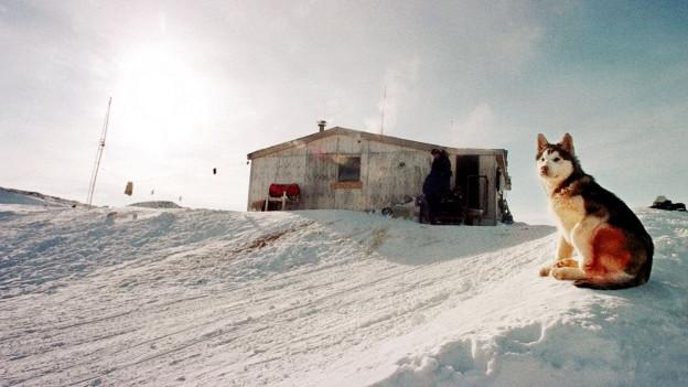 Ein Husky sitzt auf einer verschneiten Fläche, im Hintergrund ist eine einfache Hütte zu sehen.