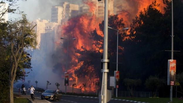 Eine Wand aus Feuer direkt neben der Strasse - so sieht es momentan in Haifa aus