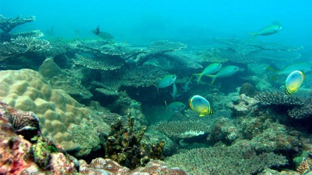 Ein Schwarm von Fischen in einem Korallenriff