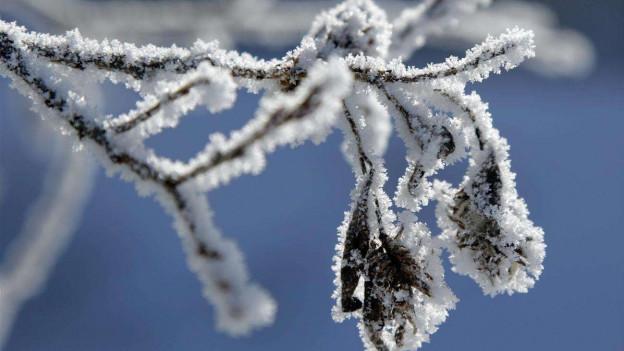 Hat im April den Bauern zu schaffen gemacht: Frost.