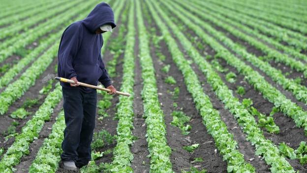 Schwarzarbeit in der Landwirtschaft. In Italien ein Riesenproblem.