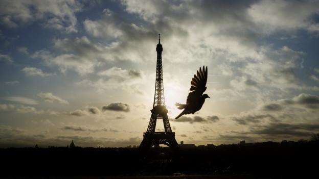 Eine Taube fliegt vor dem Eifelturm durch.