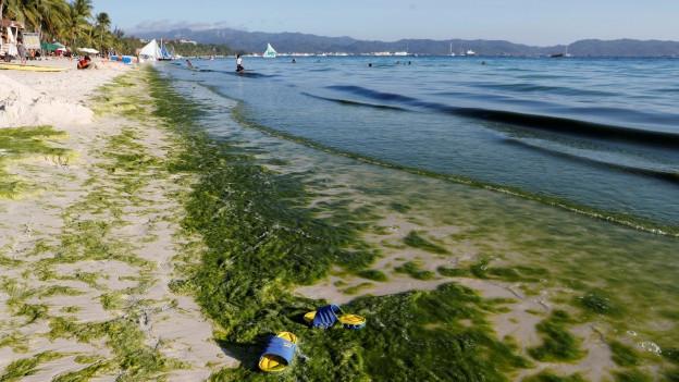 Ein Strand der Insel Boracay, der mit Algen verschmutzt ist.