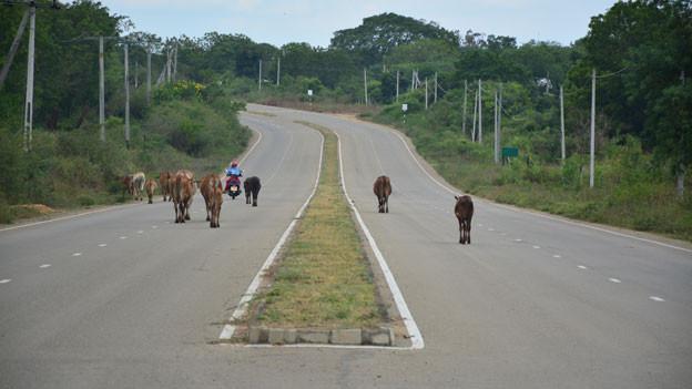 Verwaiste Schnellstrasse. Hinterlassenschaft aus der Ära Rajapaksa in Sri Lanka.
