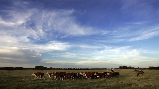 Argentinisches Fleisch ist begehrt: Zu sehen ist eine Rinderfarm im Norden des Landes.