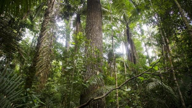 Zu sehen ist der Manu-Nationalpark in Peru mit 200 Baumarten und über 1'000 verschiedenen Vogelarten.