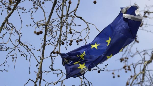 Eine Flagge der Europäischen Union hat sich in einem Baum verfangen.