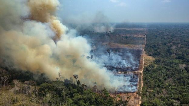 Zu sehen ist ein aktuelles Bild von den Brandrodungen im brasilianischen Amazonas-Gebiet.
