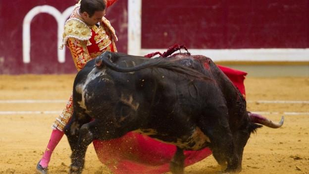 Das Bild zeigt einen Matador mit Stier.