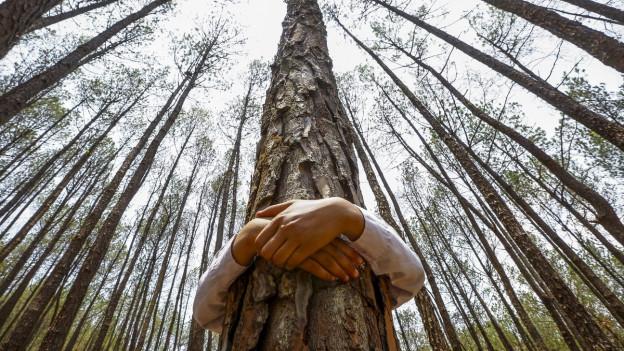 Ein Mensch umarmt einen Baum im einem Wald
