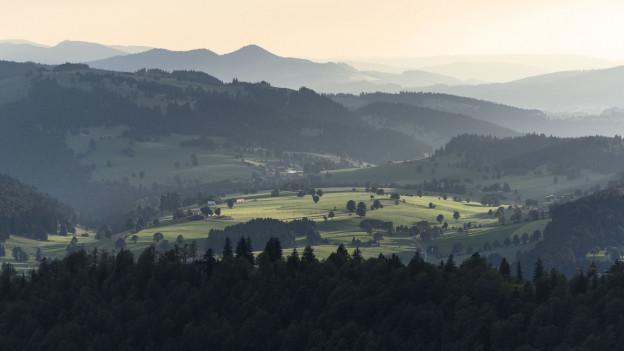 Der Borkenkäfer bedroht den jurassischen Fichtenwald und die typische Waldweiden-Landschaft des Jura.