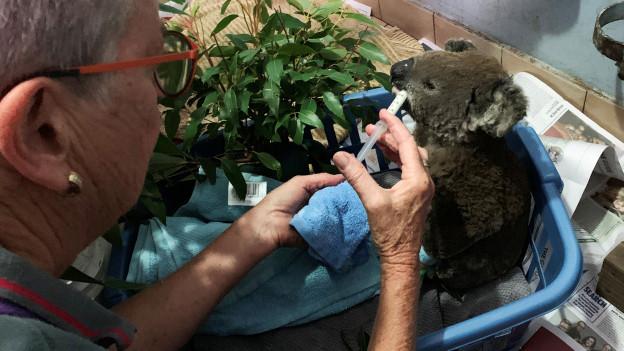Eine Frau kümmert sich um einen Koala, der im Feuer verletzt wurde.