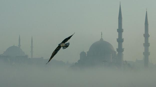 Das Bild zeigt die Silhouette zweier Moscheen in Istanbul, die aus dem Nebel herausragen. Davor fliegt ein Vogel vorbei.