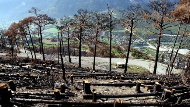 Der Wald oberhalb von Leuk 10 Jahre nach der Feuersbrunst.