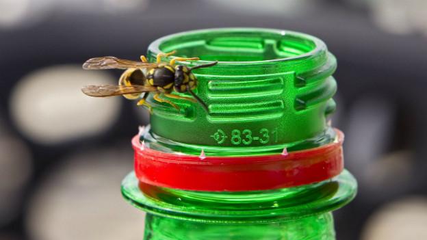 Die Wespe an der Trinkflasche - wenn die Insekten zur Plage werden.