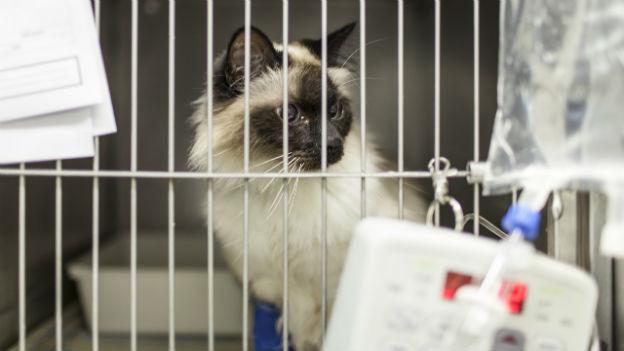 Katze - Abklärungen von Tollwut