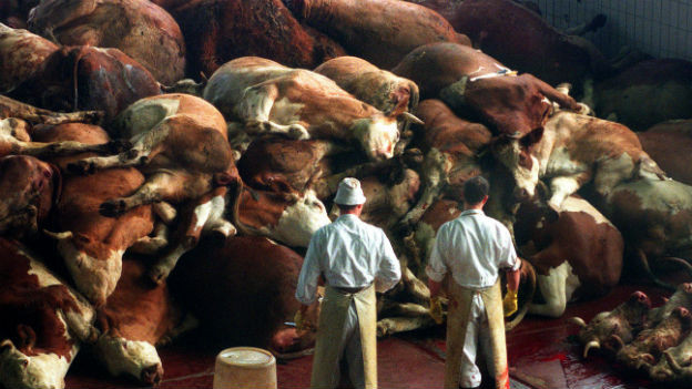 Schlachter stehen vor getöteten Rindern in einer Entsorgungseinrichtung in Oberding bei München am 21. März 1997.