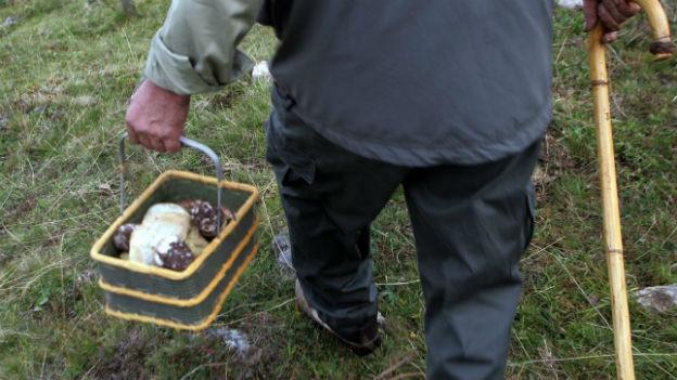 Pilzsammler in Obersaxen im Bündner Oberland.
