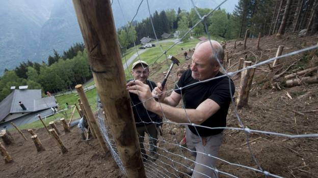 Zwei Männer errichten einen Schutzzaun