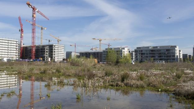 Das Bild zeigt im Hintergrund eine Siedlung, die neu gebaut wird - mit mehreren Kranen. Im Vordergrund eine Wiese.