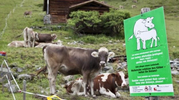 Eine Schrifttafel auf einer Alp warnt vor den Gefahren, welche von Mutterkühen ausgehen können.