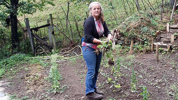 Ulricos Ehefrau Sanna holt im Garten Salat fürs Mittagessen.
