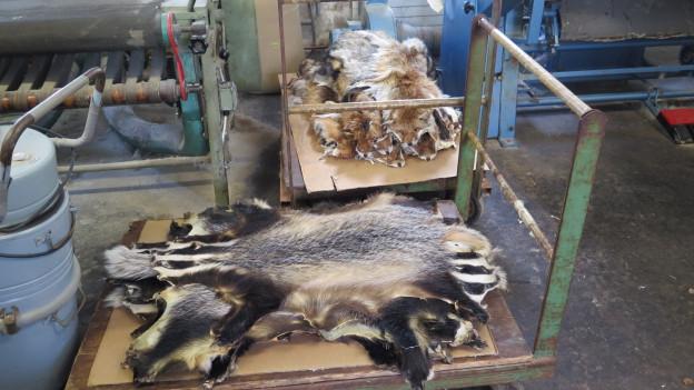 Mehrere Felle liegen ausgebreitet auf einem Handkarren.