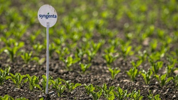 Ein Schild mit dem Logo von Syngenta auf einem Feld.