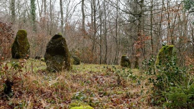 Zu sehen sind aufgestellte Steine im Wald