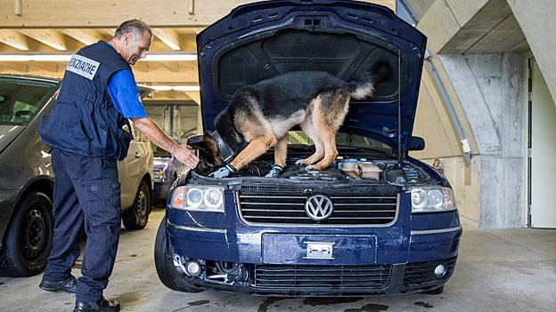 Ein Hund der Grenzwache sucht nach dem wertvollen Garn.