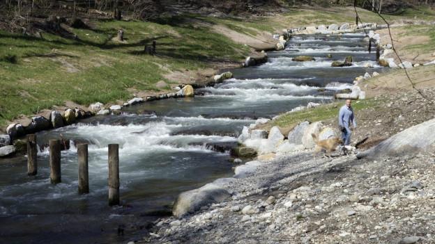 Der renaturierte Flusslauf der Versoix in der nähe von Genf.