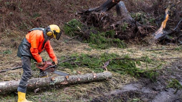 Ein Forstwirt zersägt einen Baumstamm.