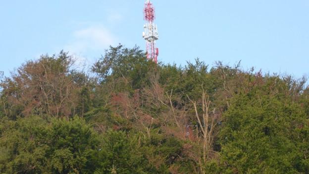 Einzelne braune Bäume in einem noch grünen Wald.