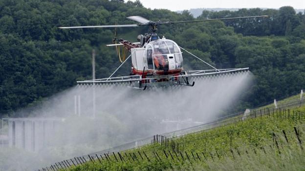 Das Bild zeigt einen Helikopter, der mit einem Schädlingsbekämpfungsmittel Reben im Kanton Genf besprüht.