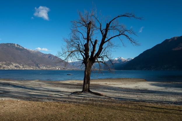 Am Ufer eines Sees steht ein ausgetrockneter Baum.