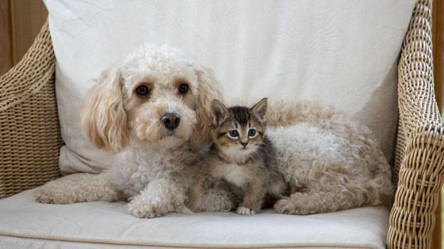 Symbolbild. Hund und Katze sitzen gemütlich beisammen.