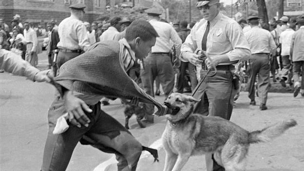 Ein Polizeihung fasst einen Demonstranten bei Bürgerrechtsproteste in Alabama 1963.
