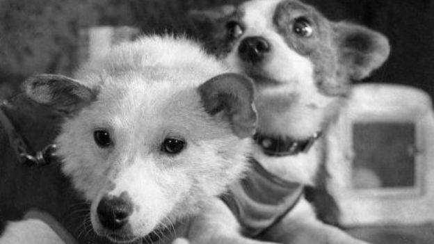 Weltraumhunde