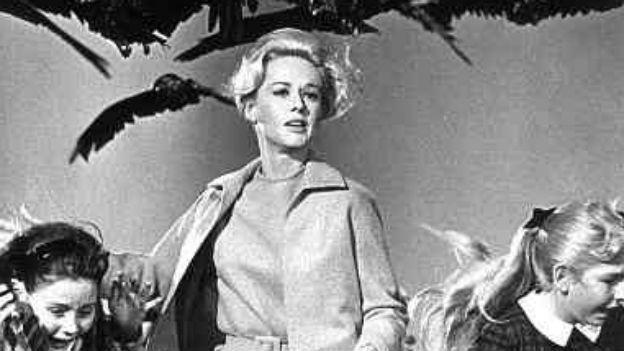 Szene aus dem Film «Die Vögel»