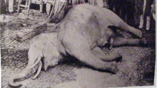 Er tötete und wurde getötet, der Zirkuselefant von Murten